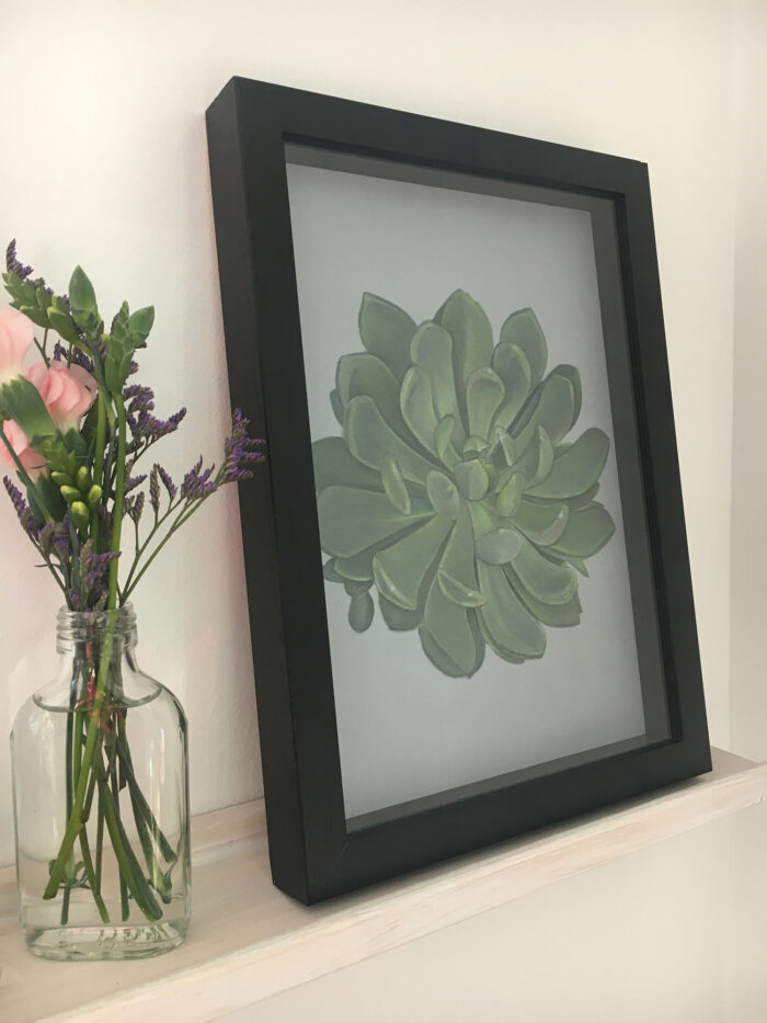 Echeveria 1, giclee print of a succulent