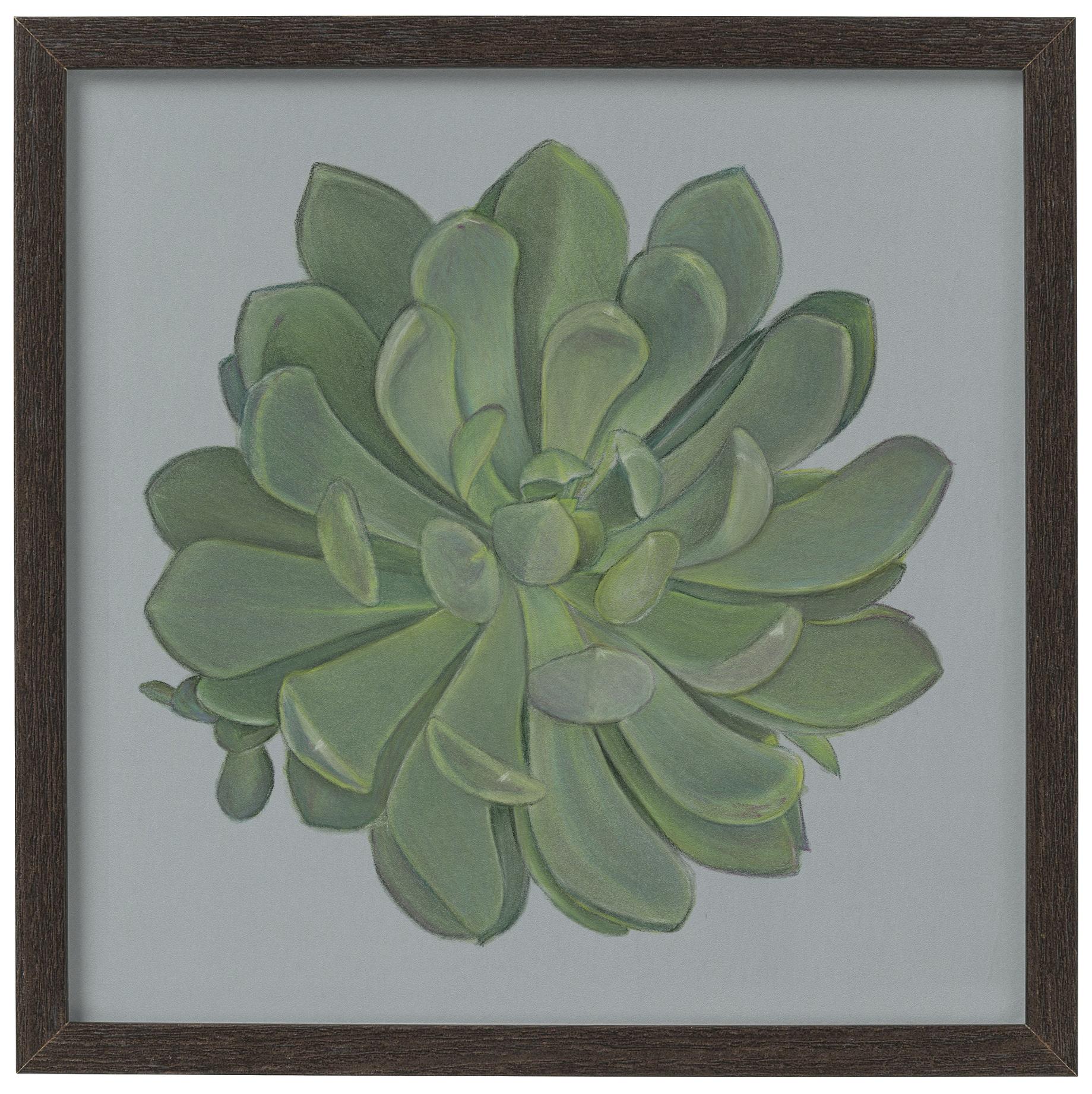 Echeveria 1 – giclee print of a succulent