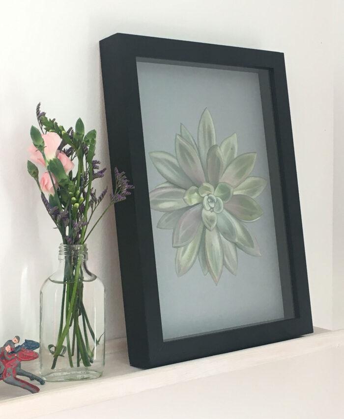 Echeveria 3 – giclee print of a succulent
