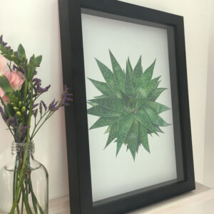 Gasteria – giclee print of a succulent